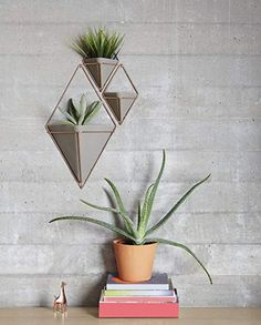 die besten 25 sukkulenten kaufen ideen auf pinterest vertikale gartenpflanzgef e betonblock. Black Bedroom Furniture Sets. Home Design Ideas