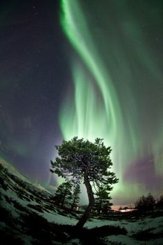 Wicked! Tromsø, #Norway, #aurora borealis #northern light
