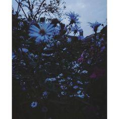 Evening Flowers in my mother's garden 🌸