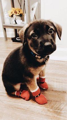 Vsco: stephanie-alfaro baby puppies, cute puppies, cute dogs, dogs and Cute Puppies, Cute Dogs, Dogs And Puppies, Doggies, Baby Puppies, Cute Baby Animals, Animals And Pets, Funny Animals, Art Clipart