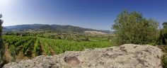 Panorama Vineyard #Berchidda #Sardegna