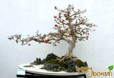 World's Most Amazing Things: Amazing Bonsai Flower And Fruit Trees