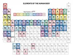 Periodic Table - Elements of the Human Body Physical Education Games, Science Education, Periodic Table Of The Elements, Human Body Unit, Deaf Culture, Neuroscience, Dental Health, Physiology, Our Body