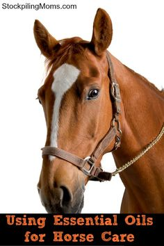 Can you use Essential Oils for Horse Care?