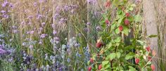 Planting scheme with a mix of edibles and cut flowers