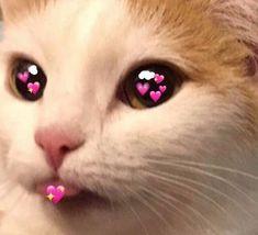 Cat face on socks happy socks custom made cat lover personalized gifts pet cat gifts womens mens socks kitty kitten funny cat gift ideas Cute Cat Memes, Cute Love Memes, Funny Cute, Funny Memes, Meme Meme, Animal Memes, Funny Animals, Cute Animals, Kittens Cutest