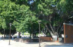 Town Center at San Ignacio Belize, Mexico, Plants, Travel, Viajes, Destinations, Plant, Traveling