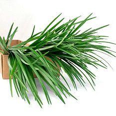 $59 Sam's Club Lily Grass Filler Flower - 250 Stems