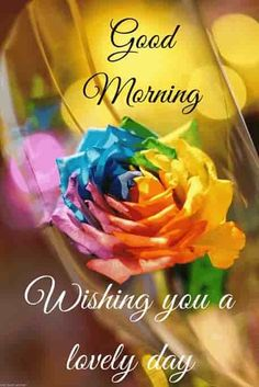 Good morning pic hd with colorful rose.