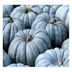 Jarrahdale Blue Pumpkin, Cucurbita maxima Seeds FRESH RARE Australian... ❤ liked on Polyvore featuring home, outdoors, garden tools and backgrounds
