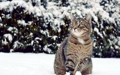 Cat in snow - My cat against a winter landscape. A cat on snow View Wallpaper, Animal Wallpaper, Winter Wallpaper, Trendy Wallpaper, Black Animals, Cute Animals, Storm Images, Winter Cat, Winter Snow