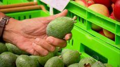 Globo Repórter - Fruta brasileira desconhecida no país faz sucesso na Nova Zelândia