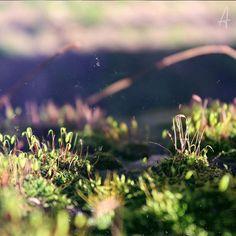 F A I R Y - V I L L A G E  #nature #photography #flower #botanic #capture#macro #green #picoftheday #macrophotgraphy #shots #canon