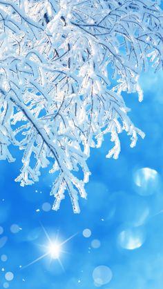 snow, winter, tree, macro wallpaper and desktop background 2376 Snow Wallpaper Iphone, Winter Wallpaper, Christmas Wallpaper, Winter Scenery, Winter Theme, Tumblr Backgrounds, Phone Backgrounds, Winter Background, Winter Wonder