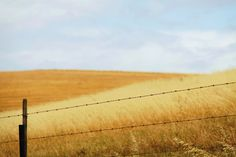 Overberg lines Field Of Dreams, Farm Life, South Africa, Fields, Photographs, Spaces, World, Photos, Cake Smash Pictures