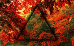 Photoshop, Red Autumn (http://www.mrwallpaper.com/wallpapers/red-autumn-forest-hd-1680x1050.jpg)