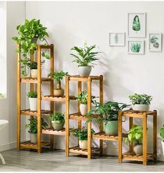 3 Things Best To Create Diy Plant Stands - Diyever Indoor Plant Shelves, Indoor Plants, Indoor Outdoor, Indoor Herbs, Indoor Gardening, Air Plants, Cactus Plants, Decoration Plante, Diy Plant Stand