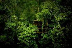 Finca Bellavista: a tree house community, Costa Rica