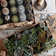 West Elm Gardenista Houseplant Guide
