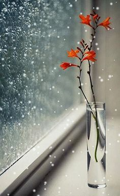 Vase on Window Sill with Orange Flowers Beautiful Flowers, Beautiful Pictures, Love Images, Simply Beautiful, I Love Rain, Deco Floral, Nature Wallpaper, Window Sill, Ikebana