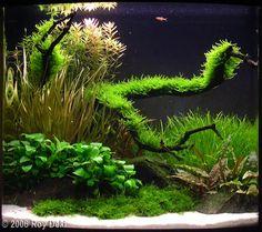 2006 AGA Aquascaping Contest - Entry #10