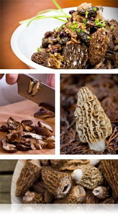 Recipes for Morel mushrooms
