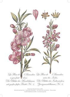 Almondflower A4 Artprint