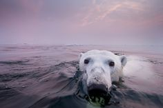 These photos from Paul Souders are *phenomenal*. Talk about getting close to wildlife.