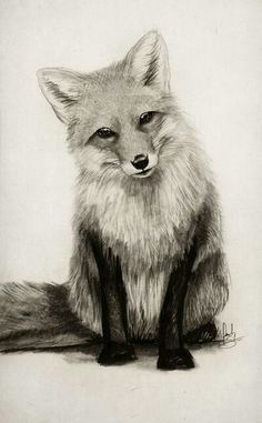 Many beginners try Easy Pencil Drawings Of Animals as animal are one of the most well liked subjects for artists to draw. Many people like to draw animals' Realistic Animal Drawings, Pencil Drawings Of Animals, Animal Sketches, Cool Drawings, Drawing Sketches, Drawing Animals, Drawing Ideas, Cute Fox Drawing, Adorable Drawings