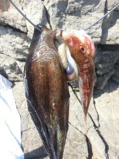 pêche d'un autre jour