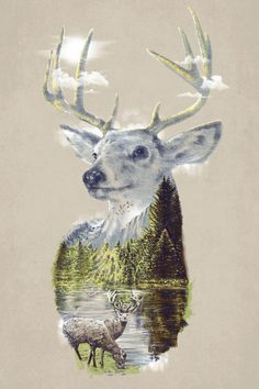 stag with a view. #inspirational. #art