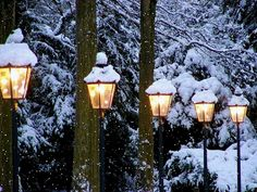 Google Image Result for  I love white and fresh fallen snow on Christmas Day. It is so clean and crisp.