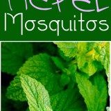 20 Plants that Repel Mosquitos