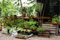 Prinzessinnengärten: organic and sustainable farming