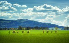 -- Springtime III. -- - Trees on a field near village Netolice in South Bohemia. www.facebook.com/fotopetrkubat
