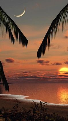 Coconut trees, Sunset, Beach, Cozumel