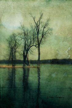 The Moss Story | jamie heiden | |Flickr - Photo Sharing!