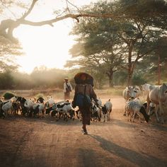 "OLLY | TRAVEL PHOTOGRAPHY (@ollygaspar) posted on Instagram: ""Goat and cattle herders at golden our in Old Bagan, Myanmar. 🚶 • • • • • #myanmartrip #myanmar🇲🇲 #instamyanmar #burma #asiatravels…"" • Jun 15, 2020 at 5:03am UTC Bagan, Cattle, Jun, Goats, Travel Photography, Journey, Animals, Instagram, Gado Gado"
