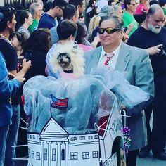 Barkus Parade Mardi Gras New Orleans Louisiana #NewOrleans #louisiana #mardigras #frenchquarter #barkus by fergie._.nola