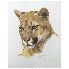 Cat Portraits by Guy Coheleach - Guy Coheleach's Animal Art Wildlife Paintings, Wildlife Art, Animal Paintings, Big Cats Art, Cat Art, Animal Sketches, Animal Drawings, Horse Drawings, Pumas Animal