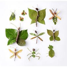 Luonnon hyönteiset
