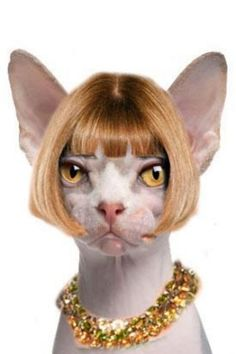Anna Wintour as a Hairless Cat. This gets an honorary pin and is the best thing ever, lol. Anna Wintour, Crazy Cat Lady, Crazy Cats, Funny Animals, Cute Animals, Devon, Cat Cushion, Sphynx Cat, Cat Hat