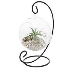 Charming Clear Glass Hanging Planter Terrarium Globe / Tea Light Candle Holder
