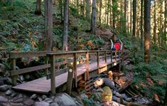 9 Essential Vancouver Spring Hikes Even Lazy People Love Lynn Canyon Suspension Bridge, Forest Bathing, Downtown Vancouver, Travel And Leisure, Travel Tips, Twin Falls, Cedar Trees, Autumn Park, Beautiful Waterfalls