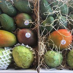 """Visitando agricultores de la Costa Tropical para preparar el mejor surtido... Disfruta de la mejor caja """"ChiriManGuacatera"""" 🌴☀️"""