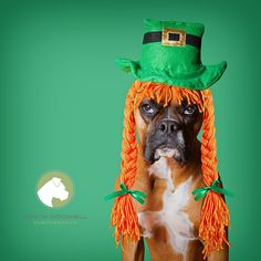 Kloe wishing you a Happy St. Patrick's Day!