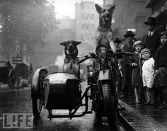 From our gallery: Animals Driving Cars
