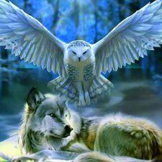Home - Save gray wolf Beautiful Wolves, Beautiful Owl, Animals Beautiful, Wolf Artwork, Native American Images, Fantasy Wolf, Wolf Spirit Animal, Wolf Wallpaper, Wolf Love