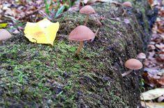 The Fellowship of mushrooms