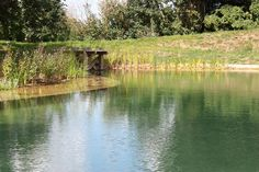 How To Make A Pond For Fishing Pinterest Pond Fish And Homesteads